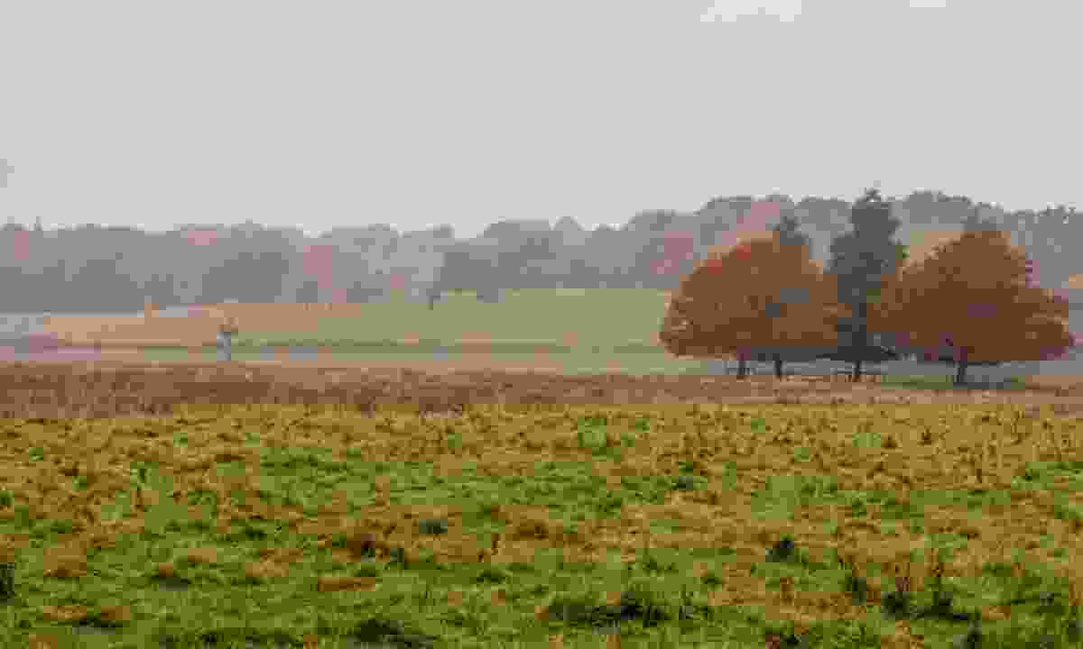 Cheshire in autumn (Dreamstime)