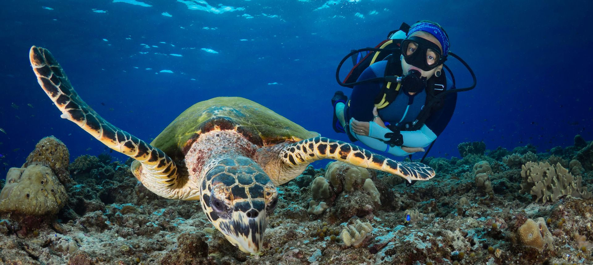Diving and snorkelling adventures can be so rewarding (Shutterstock)