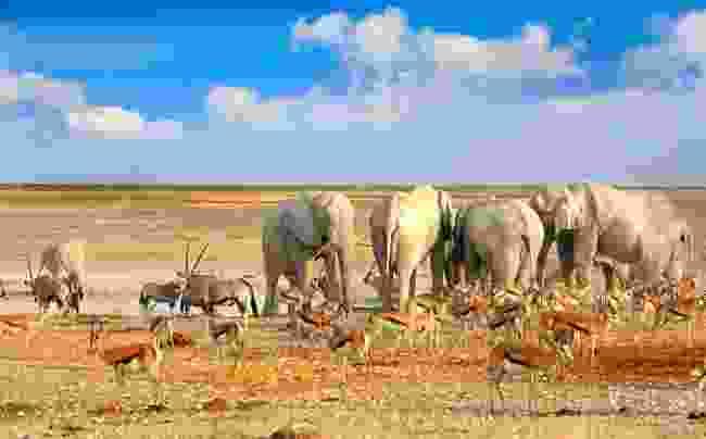 Etosha National Park, Namibia. (Dreamstime)