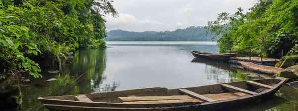 Gorilla, Cameroon (Dreamstime)
