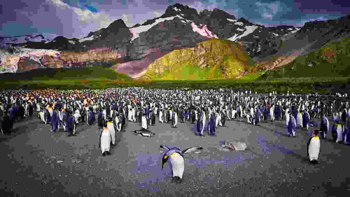 Penguins in South Georgia (Peter Eastway)