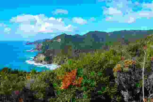 Great Barrier Island, New Zealand (Shutterstock)