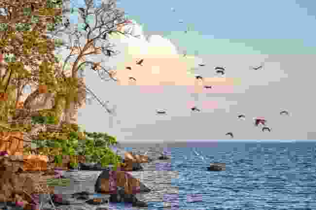 Punta Jesús María, Lake Nicaragua (Shutterstock)