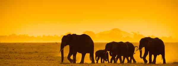Sunset in the Mara (Dreamstime)