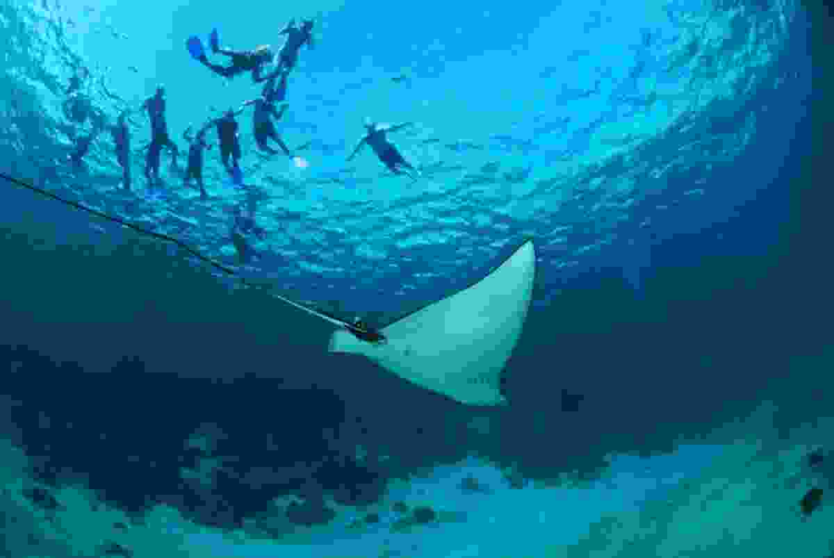 Diving at Hol Chan Marine Reserve. (Belize Tourist Board)