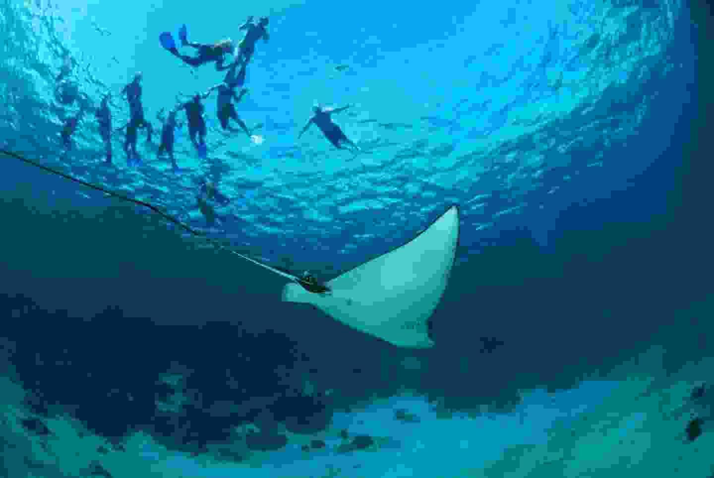 Diving at Hol Chan Marine Reserve. (Belize Tourist Board)