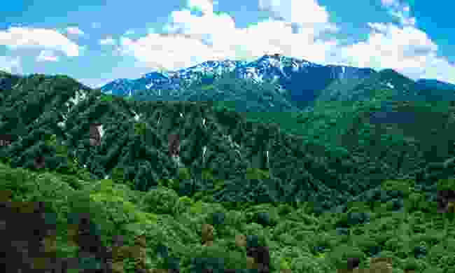 The Shirakami Mountains