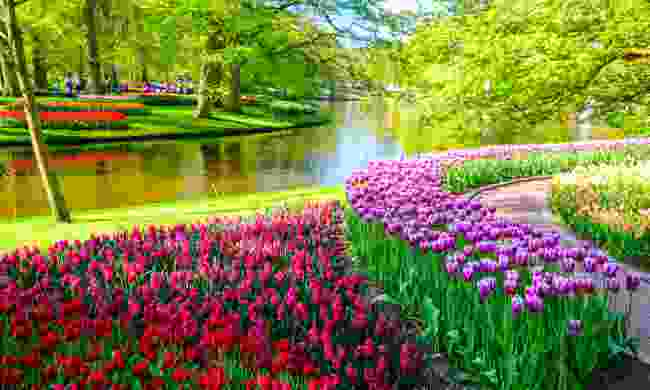 The beautiful Keukenhof flower garden in full bloom (Shutterstock)