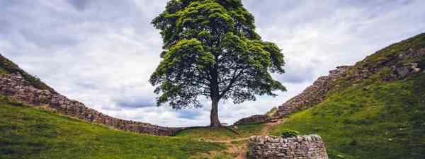 Sycamore Gap on Hadrian's Wall (Shutterstock)