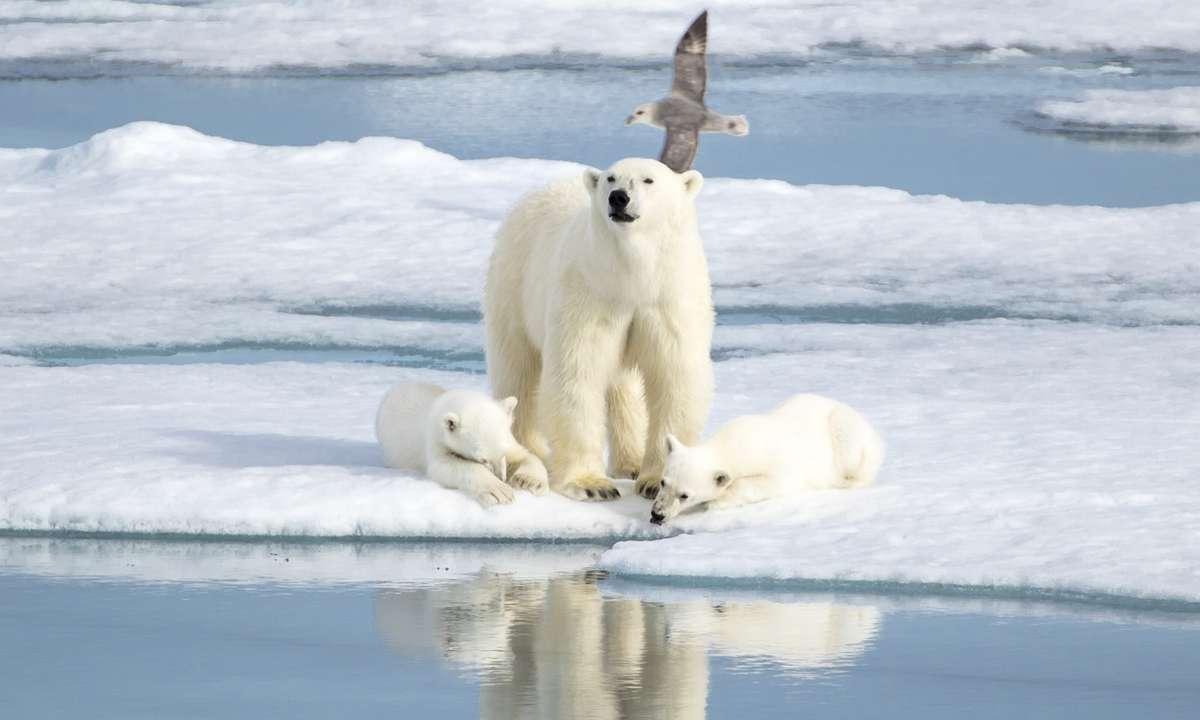 Polar bear and cubs (Dreamstime)