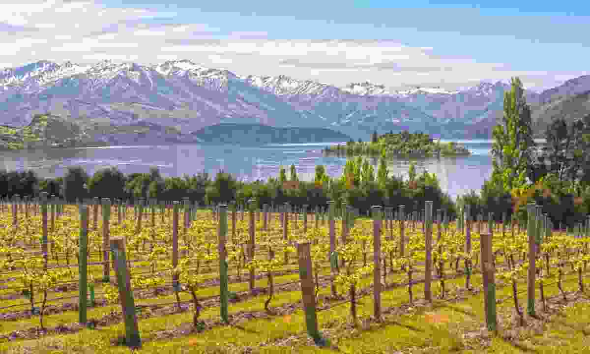 Vineyard by lake in New Zealand (Shutterstock)