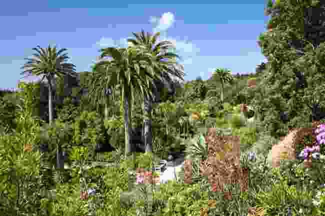 Tresco Gardens on the Isles of Scilly (Shutterstock)