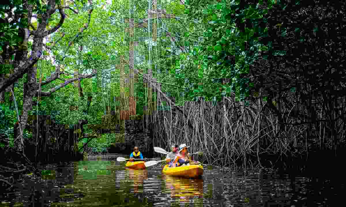 Kayaking through mangroves (Tourism Fiji)