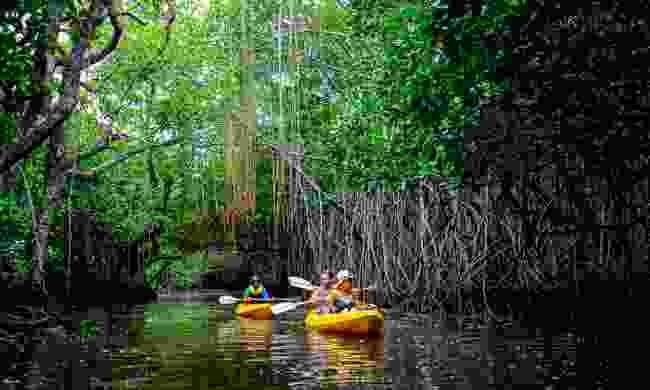 Kayaking through mangroves (Tourism Fiji)