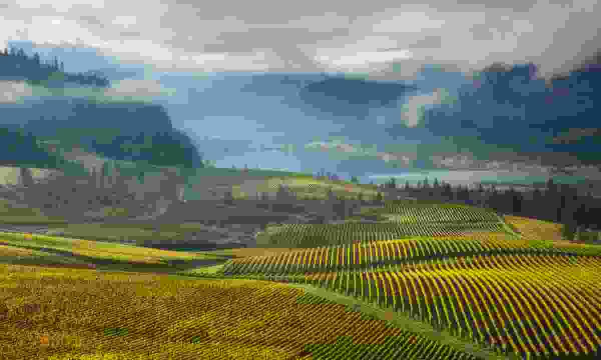 Explore some of British Columbia's many vineyards (Destination British Columbia, Adam Gibbs)