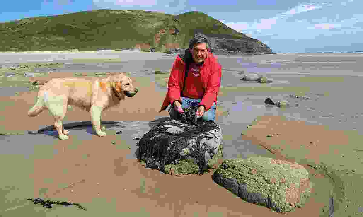 The pair foraging for food on Morfa Bychan beach (Graeme Green)