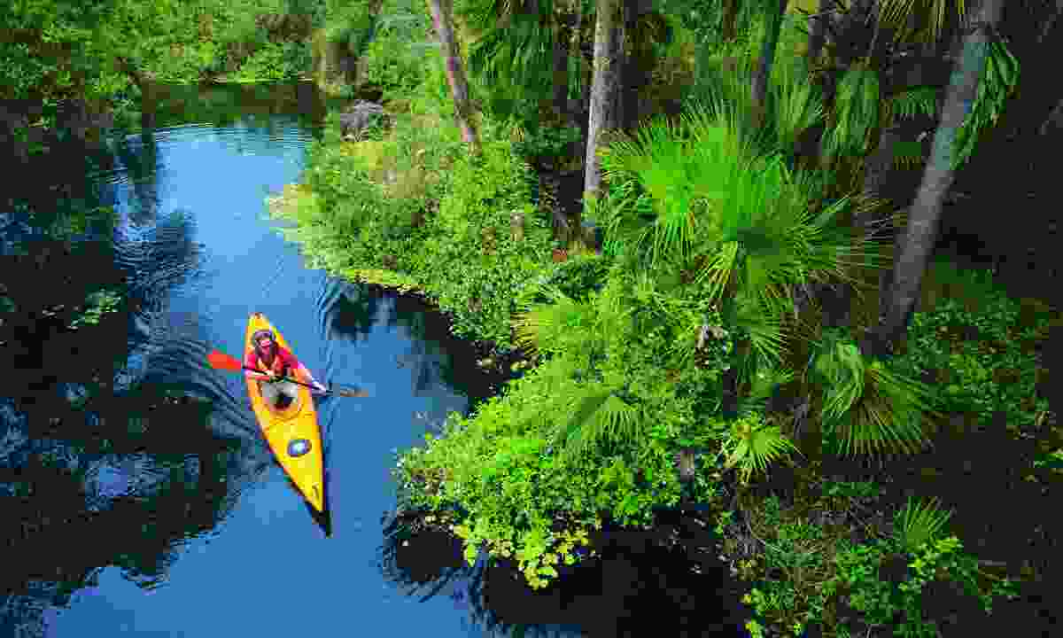 Kayak among mangroves in Fort Myers, Florida