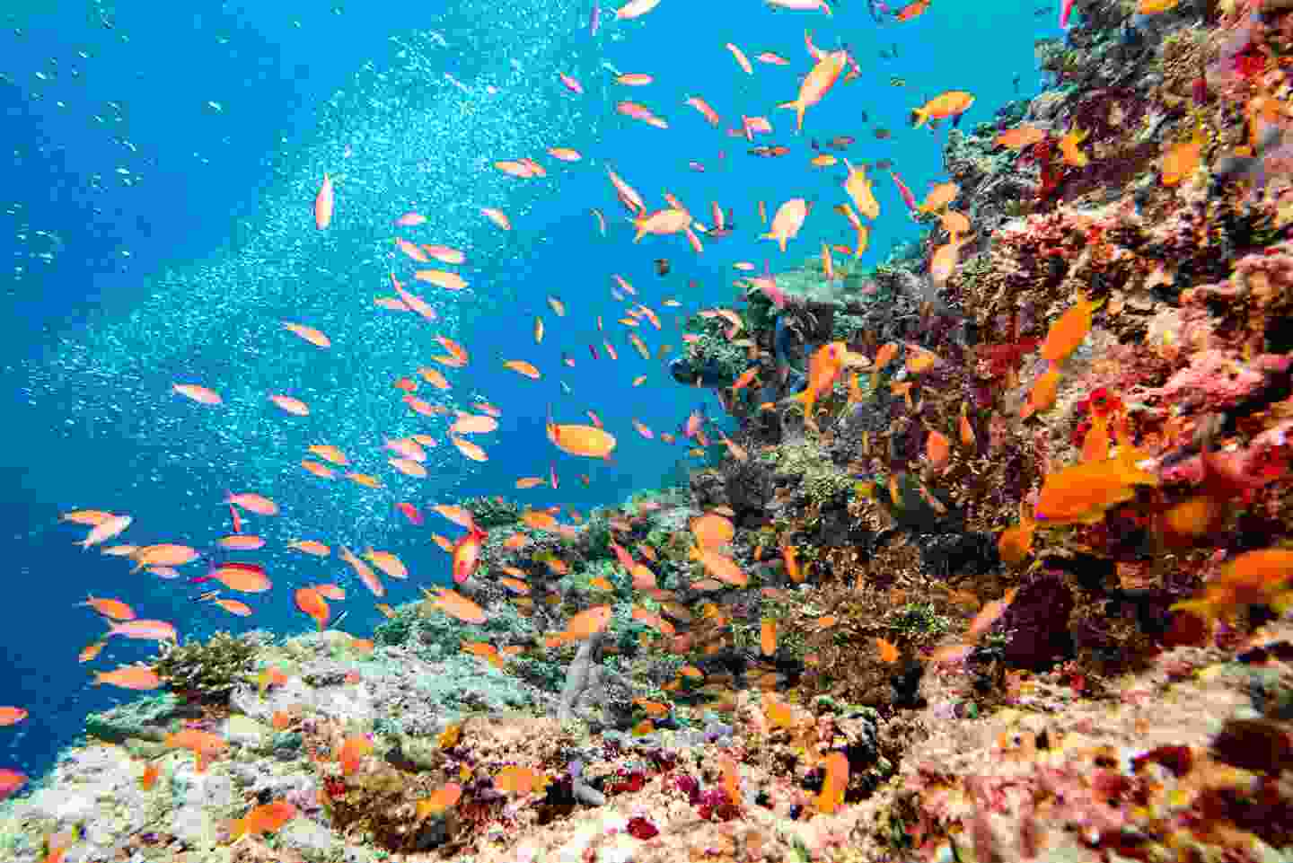 The wonder of the Great Barrier Reef still can't be missed (Shutterstock)