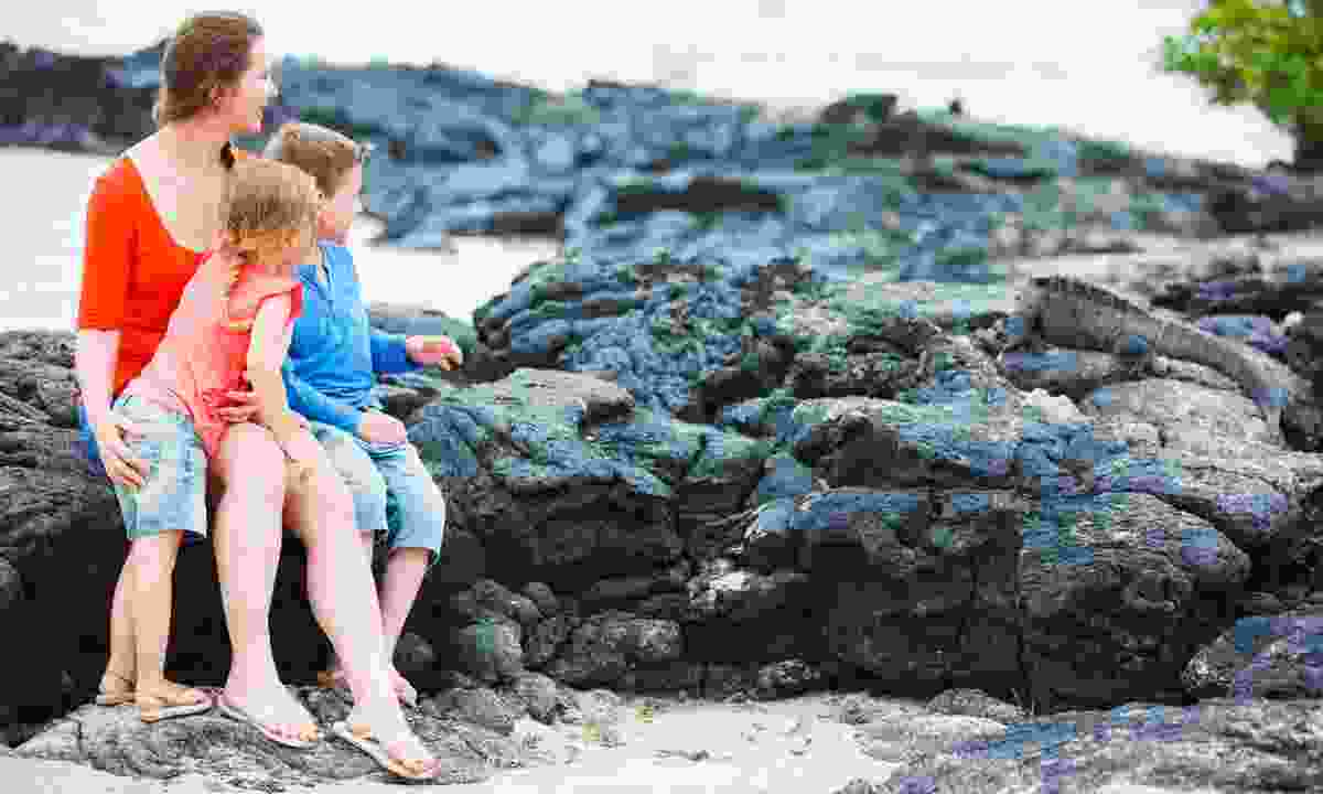 Young family watching a marine iguana (Dreamstime)