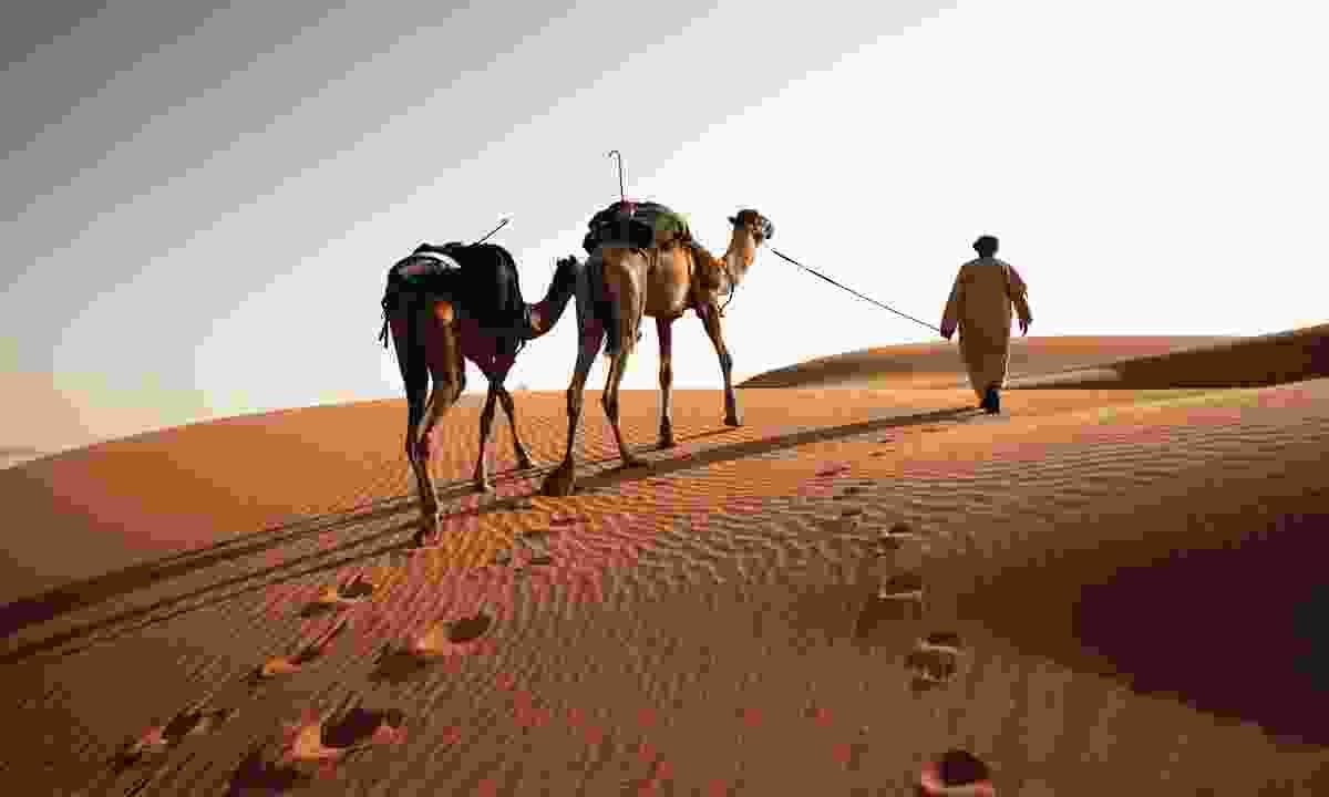 Mahrouqi leading camels into the Empty Quarter (Levison Wood)