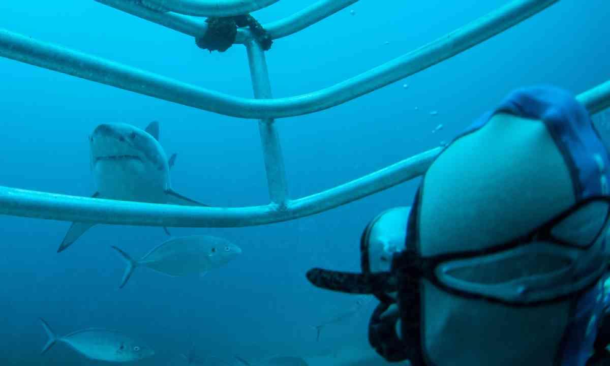 Shark diving (SATC)