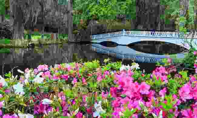America's oldest public gardens at Magnolia (Shutterstock)