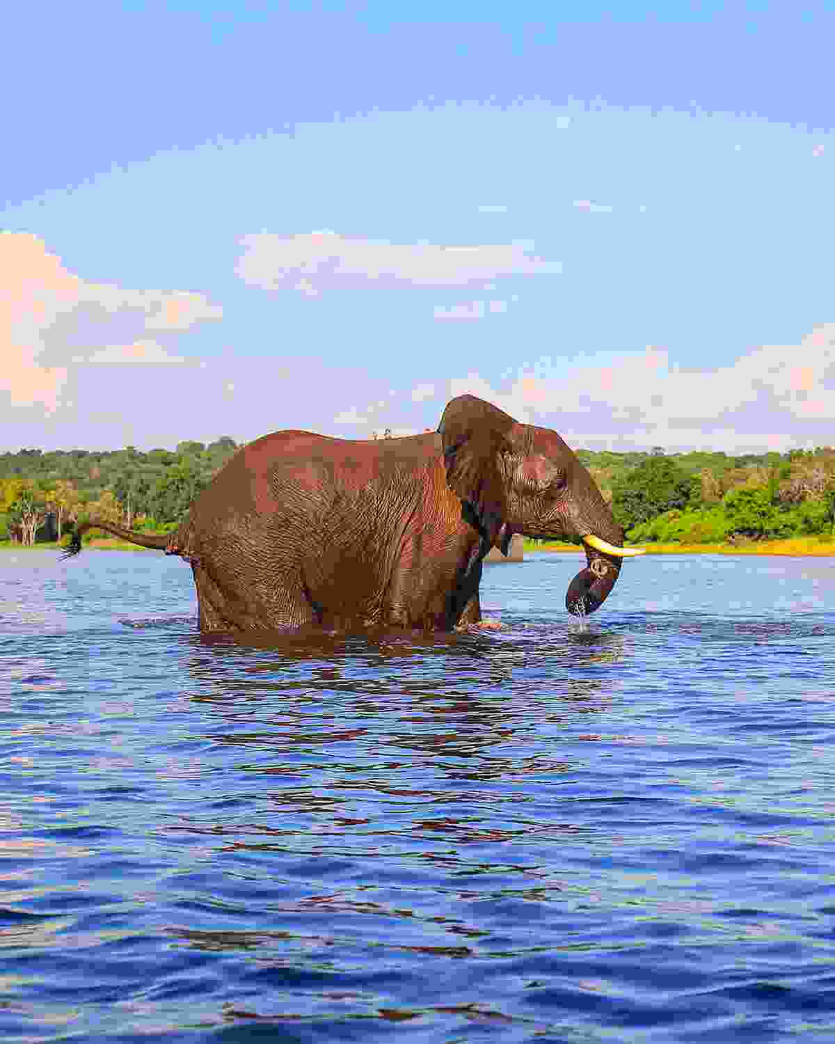 An elephant cools off at Kruger (Shutterstock)