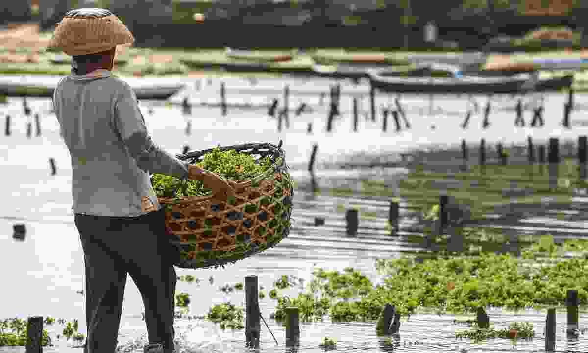 A seaweed farm in Bali (Shutterstock)