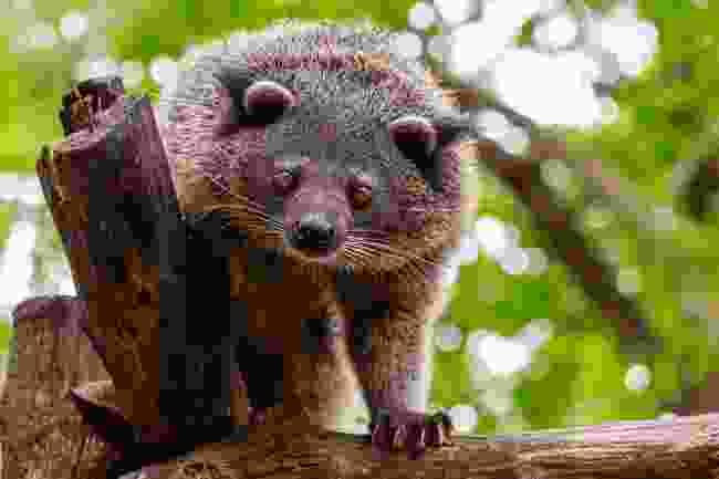Identify these strange animals (Shutterstock)