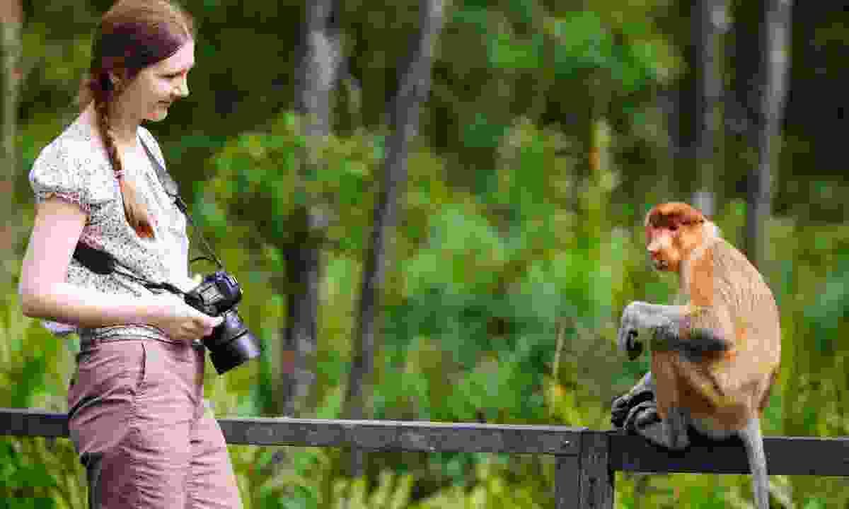 Photographer with a proboscis monkey (Dreamstime)