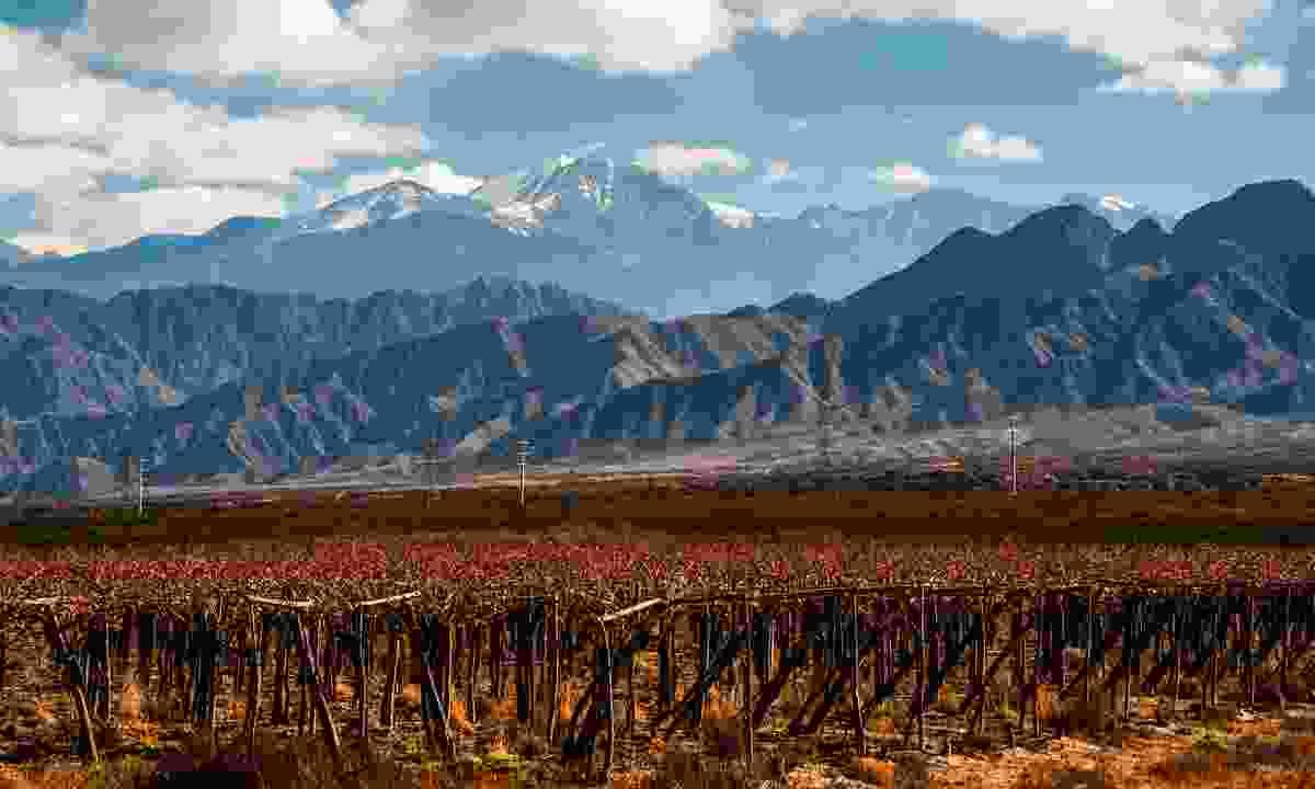 Vineyards near Mendoza (Shutterstock)