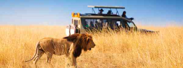 advice for going on safari (Dreamstime)
