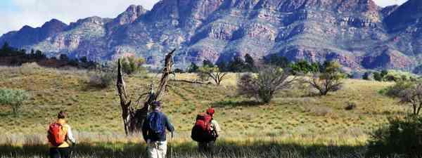 Where should you go on a walking safari?