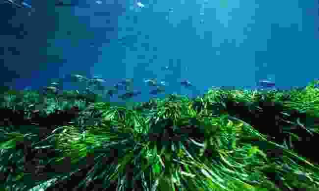 Posidonia Oceanica (Turismo de Formentera)