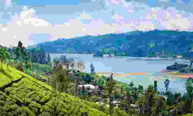Tea plantations in Kandy (Shutterstock)