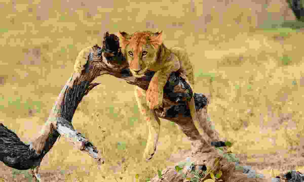 Selous Game Reserve, Tanzania (Shutterstock)