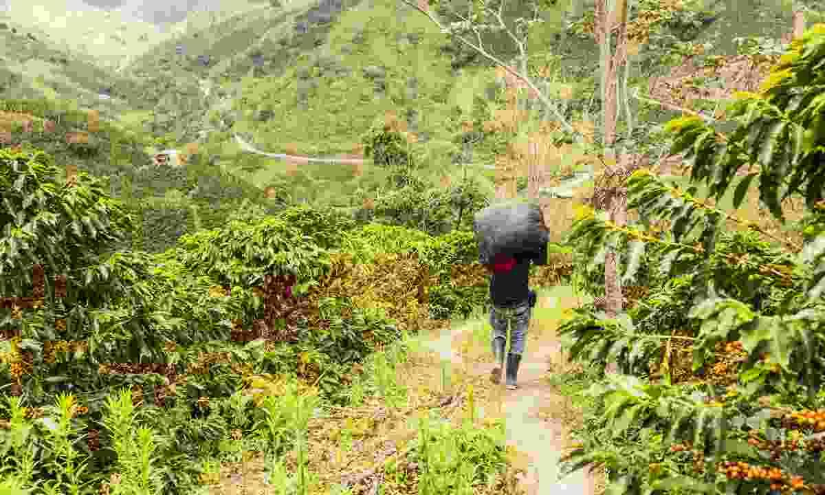 Colombian coffee farmer (Shutterstock)