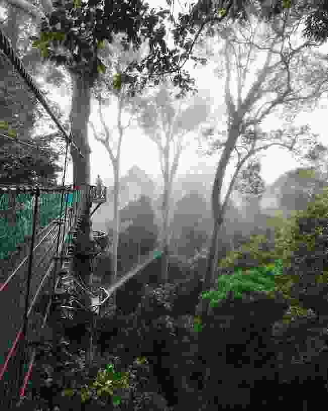 Treetop Canopy Walkway in Danum Valley (Sabah Tourism Board)
