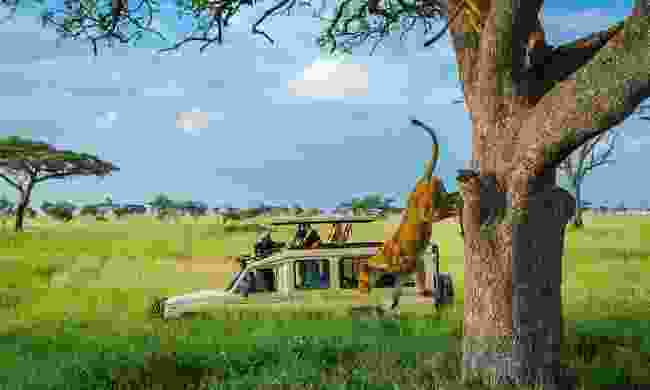 Tree lions: Whizz straight to the wildlife on a 4WD Serengeti safari (G Adventures)