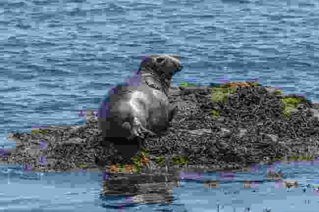 Bardsey Island: Small, but perfect, with seals,too! (Shutterstock)