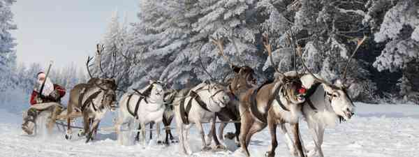 Santa and his reindeer (Dreamstime)