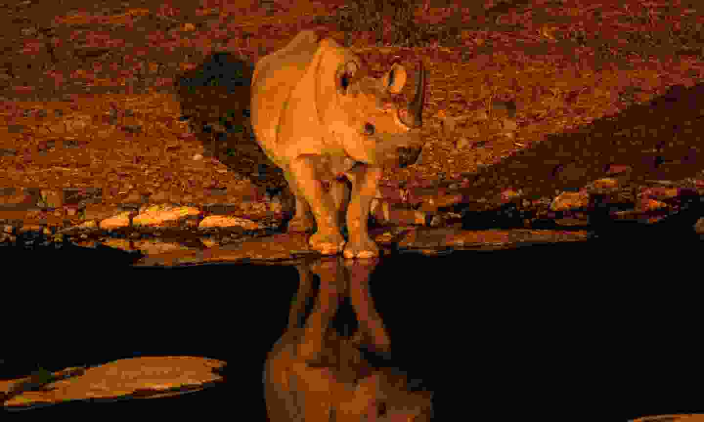 The lit up watering hole at Etosha NP (Dreamstime)