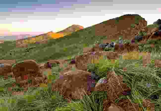 A middle-earth landscape on the Amatola Trail (Alamy)