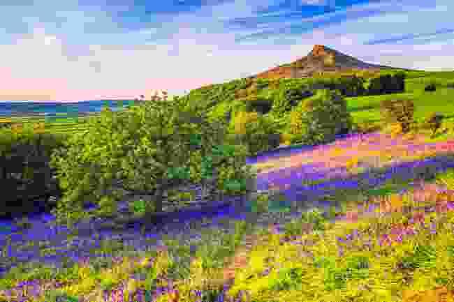 Bluebells in Newton Woods, Roseberry Topping, North York Moors National Park (Shutterstock)