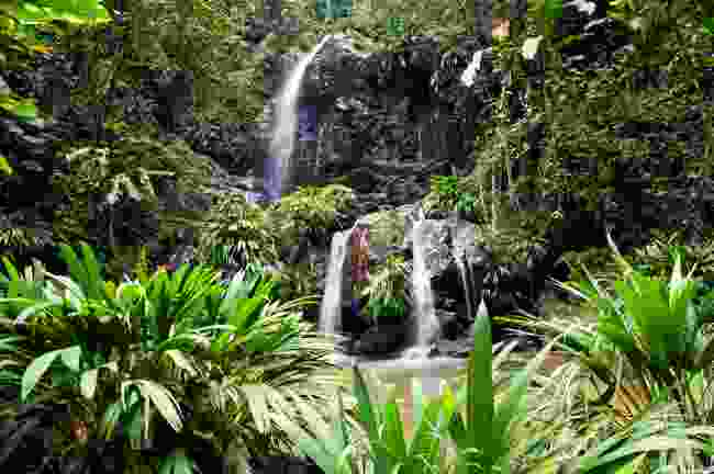Hike in the oldest protected forest reserve in the western hemisphere (Tobago Tourism Agency Ltd)