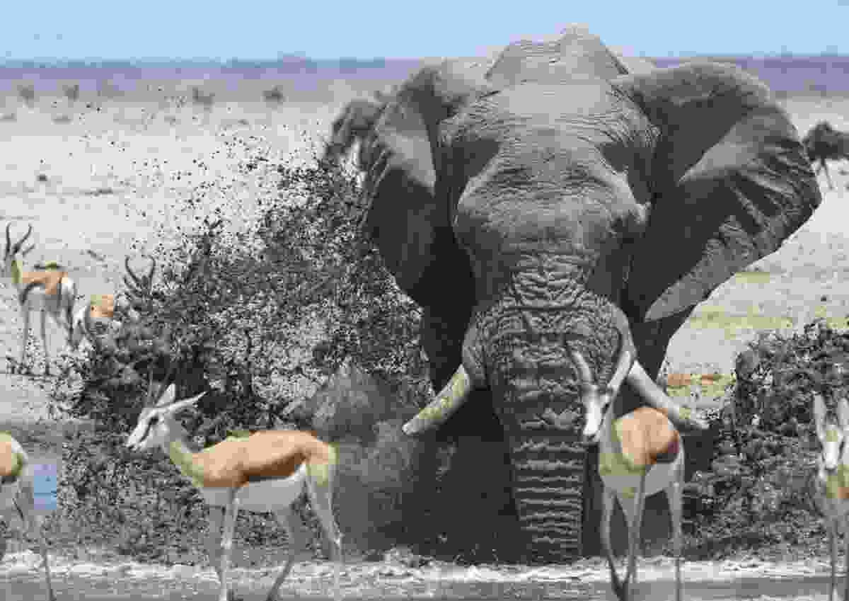 'Splashing about' in Etosha National Park, Namibia (John Platt)