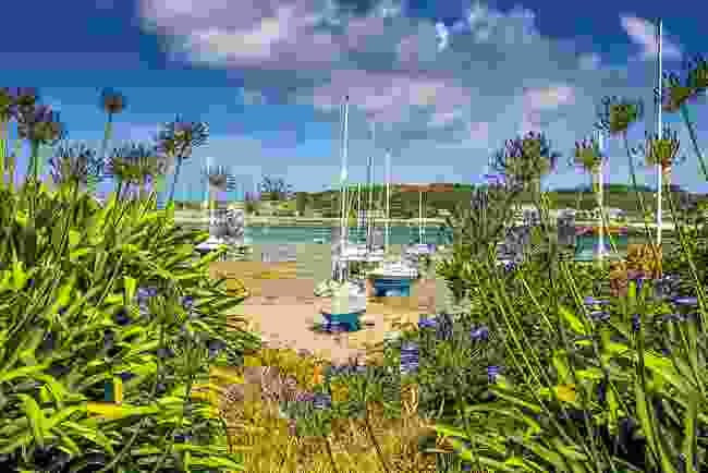 Spying yachts on the beach through the blooming agapanthus (Wanderlust)