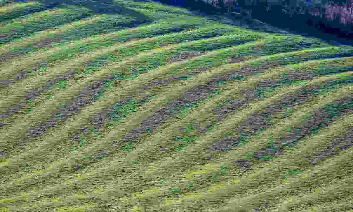 Ridge and furrow field (Shutterstock)