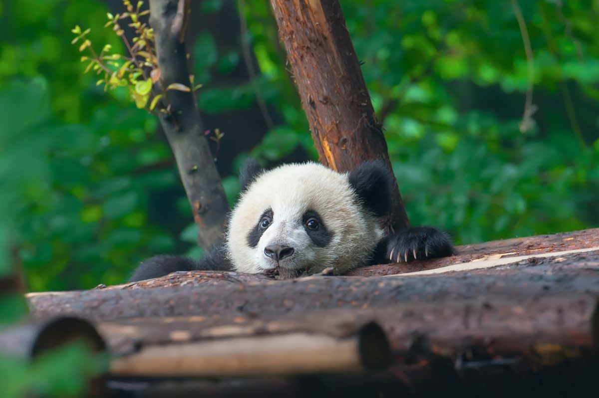 11 adorable animal babies around the world – where to see them and the right time to go