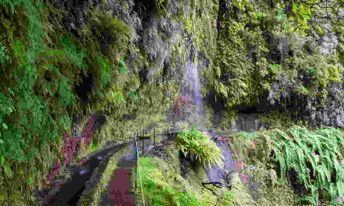 Follow the Levada do Rei through the UNESCO-listed Laurissilva forest (Shutterstock)